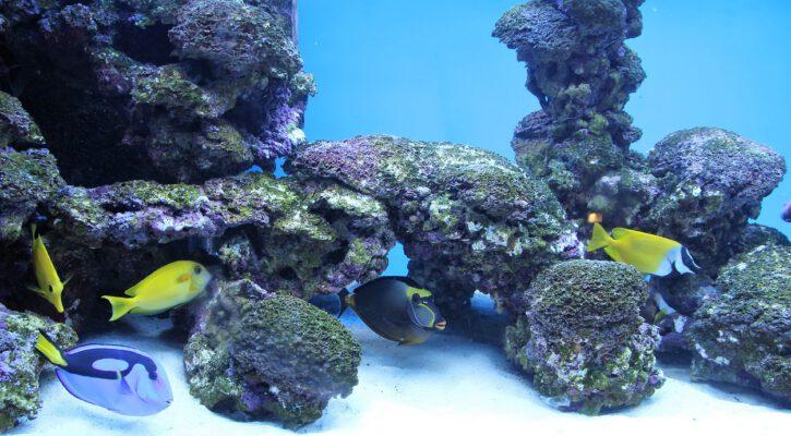 akvárium do kanceláře
