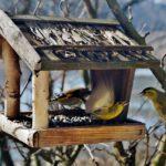Ptačí budky a krmítka hodící se za okno Vaší kanceláře