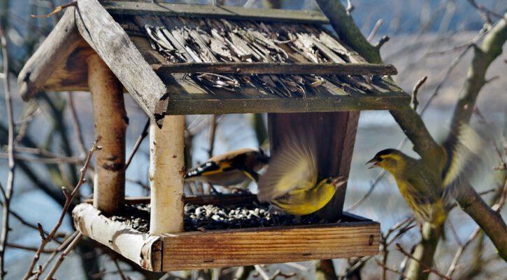 Ptačí budka za okno kanceláře