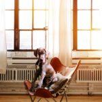 Jak zútulnit pracovnu pro domácí mazlíčky